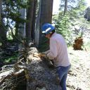 Volunteer Desiree Rufer chipping bark off to prepa